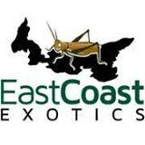 East Coast Exotics